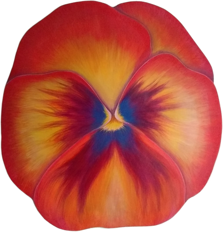 orange and red pansy
